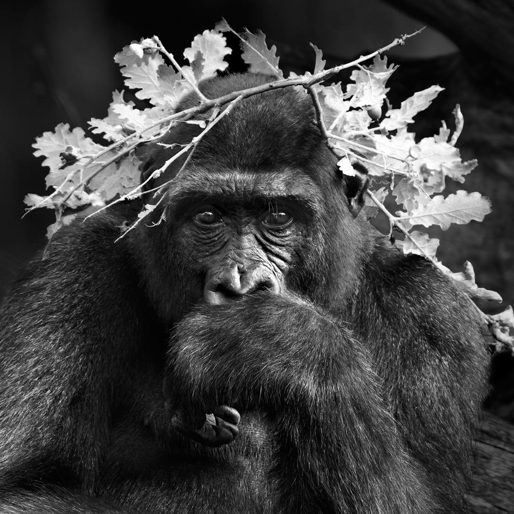 イサベル・ムニョス「ラ・ヴァレ・デ・シーニュ」《霊長類》シリーズより、ロマーニュ(フランス)、2015年 © Isabel Muñoz