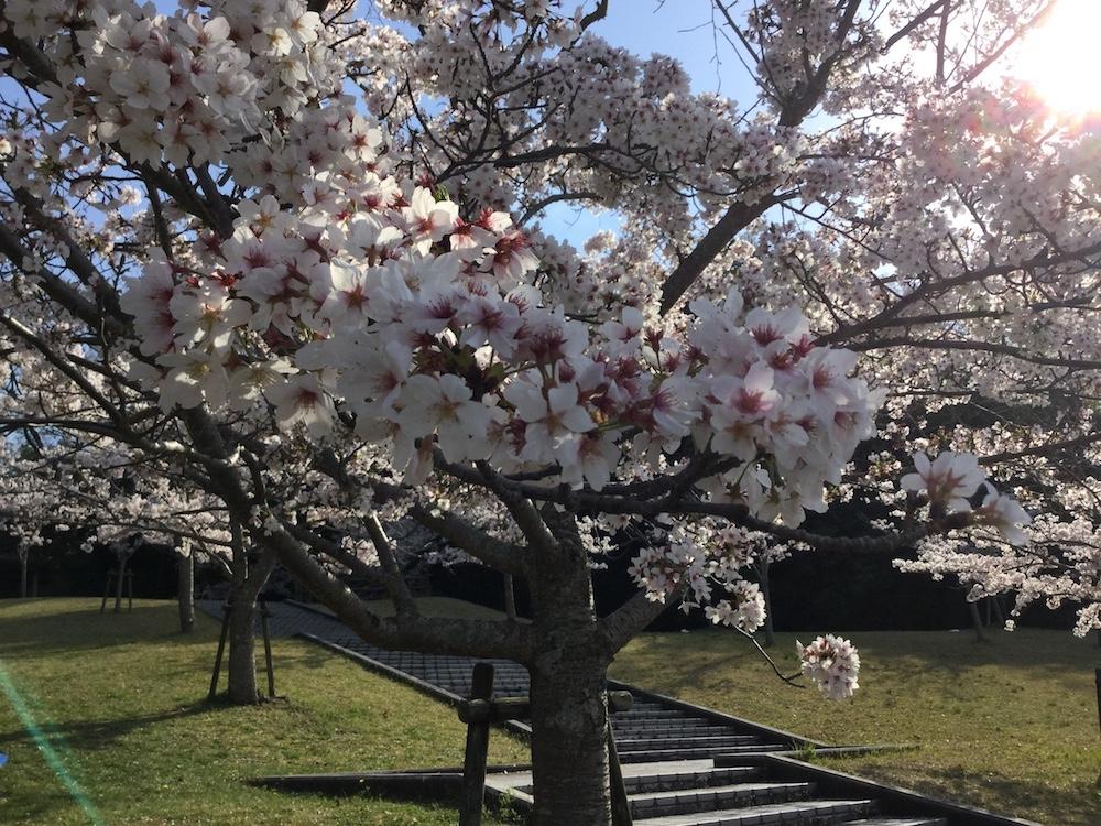 "Ellis Arimitsu ""A new light of spring"""