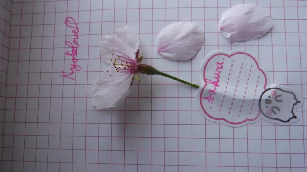 """Laura Le Texier """"Fleur de Sakura"""""""