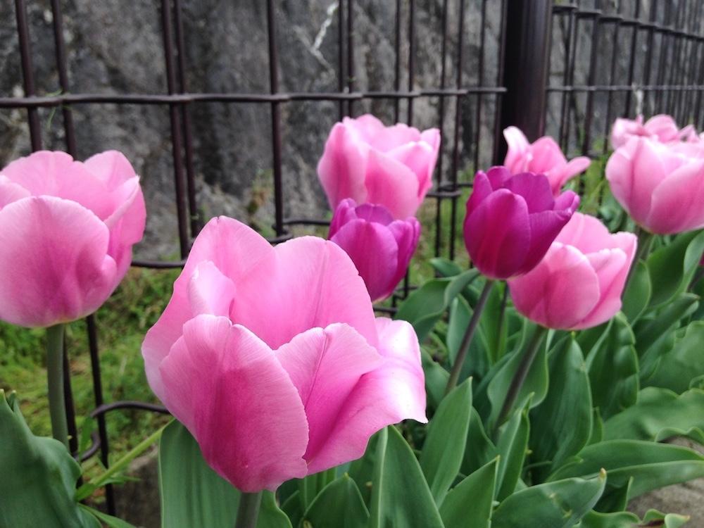 """Shusei Yokota """"LOVEly flowers!"""""""