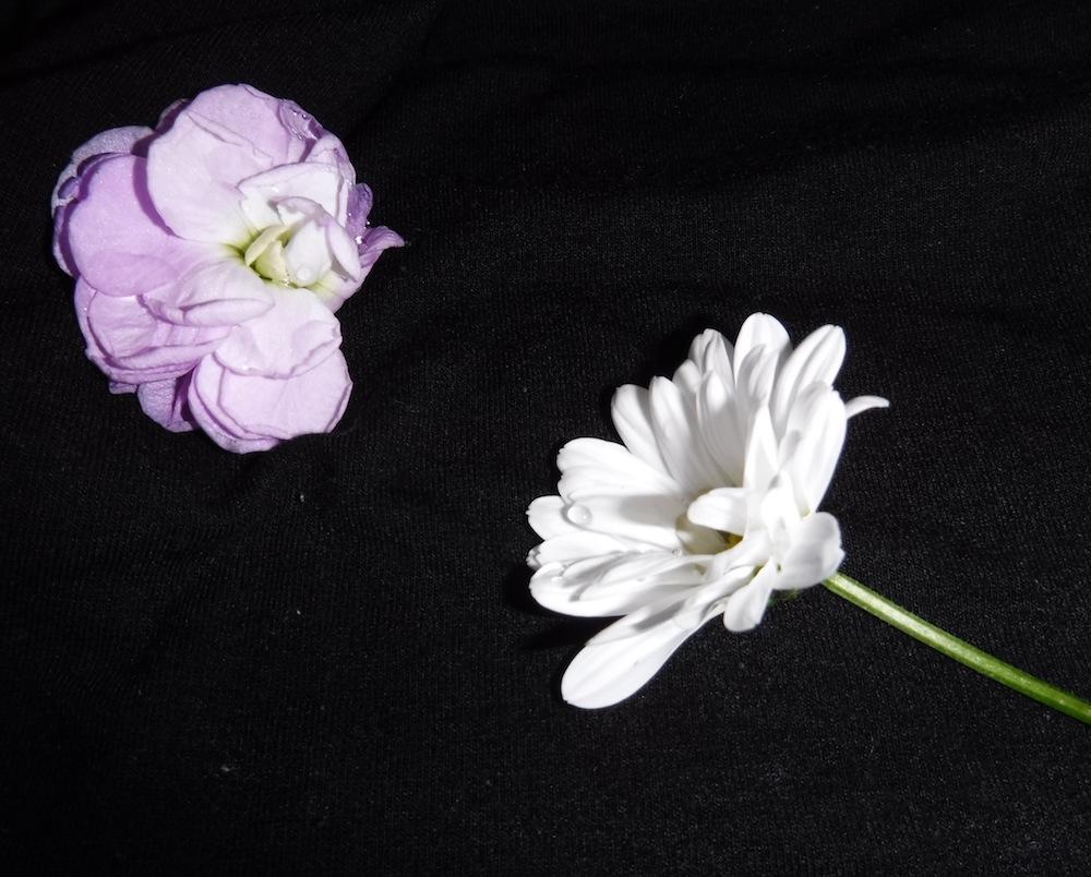 """Manon Dubuis """"deux fleurs d'amour"""""""